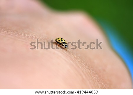 the little yellow ladybug crawling on a human hand - stock photo
