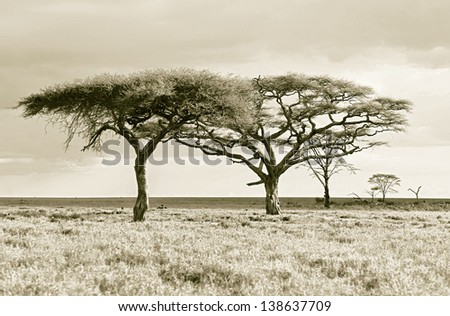 The lofty trees in Crater Ngorongoro National Park - Tanzania (stylized retro) - stock photo