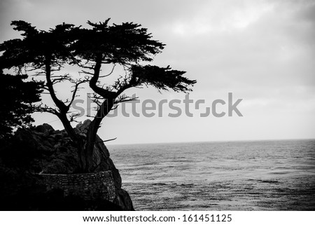 The Lone Cypress Tree at dusk on the 17 Mile Drive in California. - stock photo