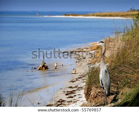 The lone heron watching contaminated shore. - stock photo