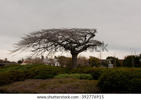The lonely tree in Invercargill, New Zealand - stock photo
