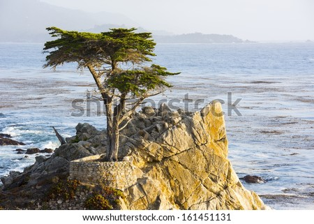 The Long Cypress Tree  on the 17 Mile Drive in California. - stock photo
