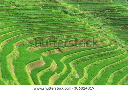 The longji rice terrace viewed from the viewpoint number 3 golden buddha peak. Longsheng, China