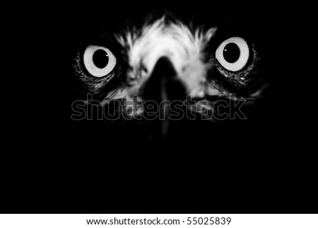 The look of predator - stock photo
