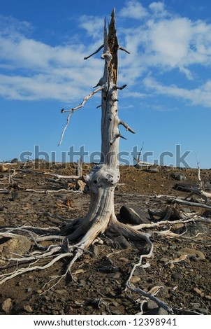 The lost tree - stock photo