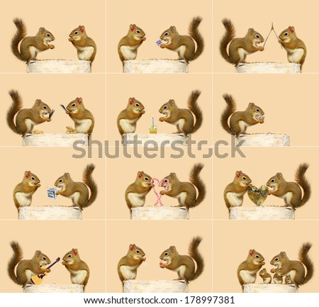 The love story of two little squirrels. A sequence of humorous events, ending with them starting a family.  Each full sized image is available in my portfolio (some are without the hair bow). - stock photo