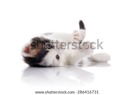 The lovely kitten, white with spots, lies on a white background. - stock photo