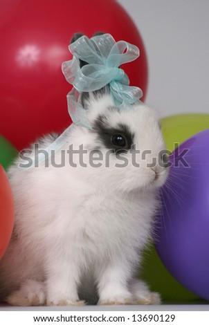The lovely rabbit among balloons on a white background