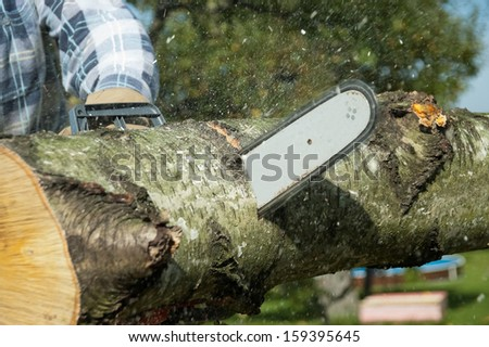 The lumberjack cuts the birch by the chainsaw - stock photo