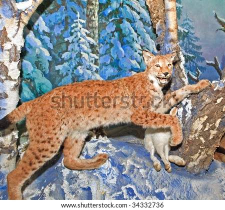 The lynx hunts on hares - stock photo