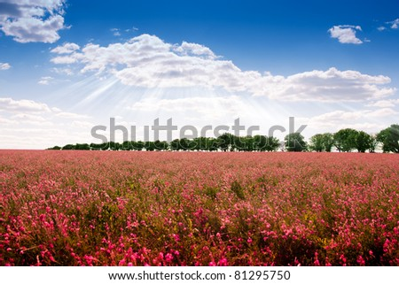 The magnificent landscape of flower fields separated by trees - stock photo