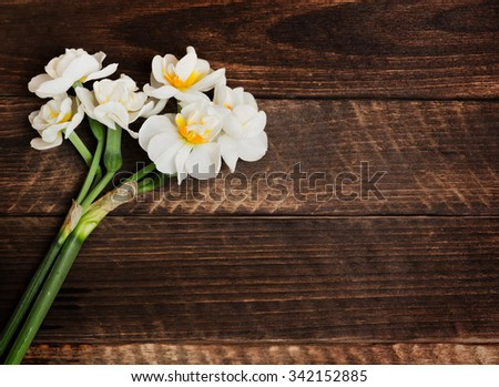 the magnificent narcissus on the old wooden panel - stock photo