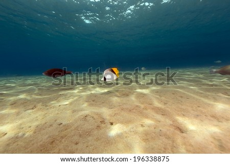 The magnificent underwater world of the Red Sea - stock photo