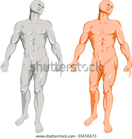 The male human anatomy standing on isolated white background