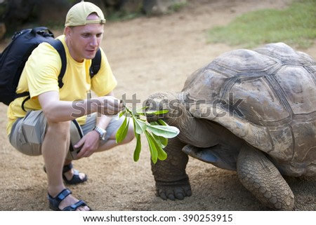 The man the tourist feeds a turtle, focus on a turtle - stock photo