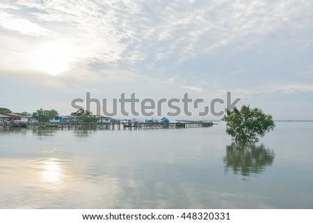The mangrove tree near the urban - stock photo