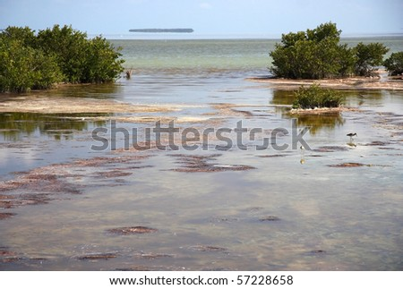 The mangroves of Florida Bay, Everglades National Park - stock photo