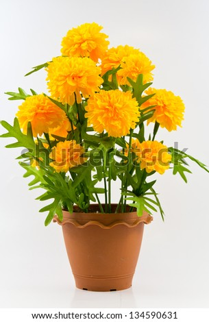 The marigold in pot on white background. - stock photo