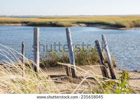 The marshes of Cape Cod. - stock photo