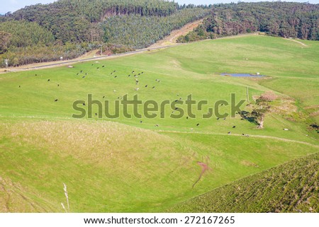 The meadows with the cows - stock photo