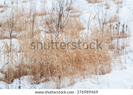 The melting snow reveal the dead grass beneath it in the field - stock photo