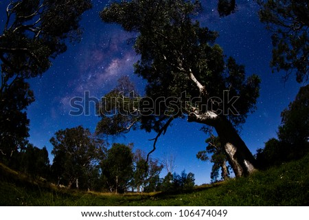The milky way over old eucalypt trees. High iso to capture stars and milky way with no movement. - stock photo