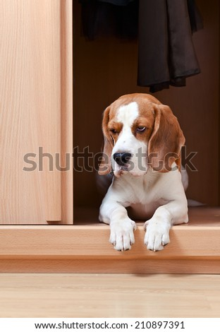 The missing dog has climbed in a wardrobe