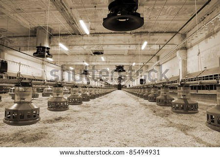 The modern and new automated integrated poultry farm - stock photo