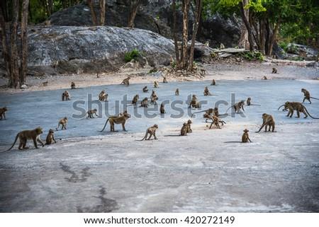 The monkey family on high mountain in Thailand - stock photo