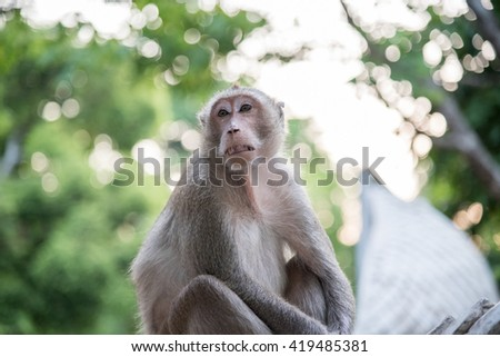 The Monkey is sitting on blur background - stock photo