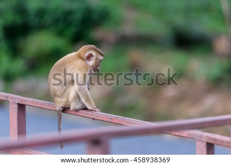 The monkey sitting to watching something in park of Thailand
