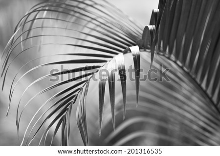 The monochrome palm - stock photo