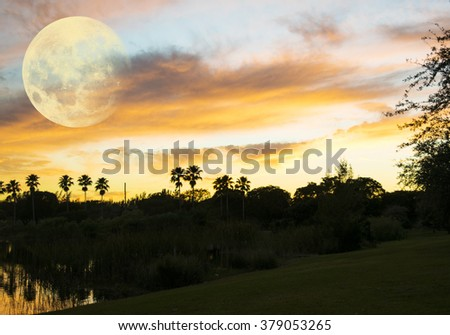 The Moon and the palms
