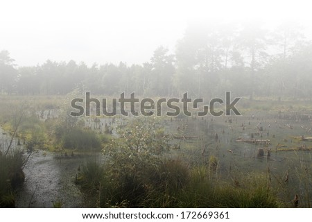 The Moor's habitat in which many animals and plants are native. - stock photo