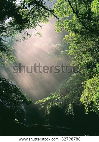 the morning sun light through the forest - stock photo