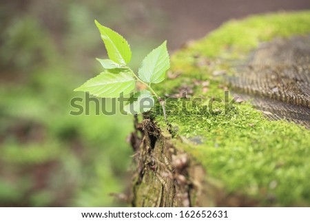 The moss of a stump, and the sprout of a zelkova - stock photo