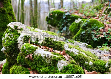 the moss on the rocks - stock photo