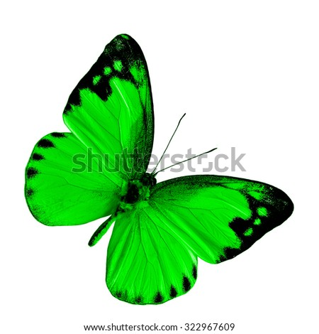 The most beautiful dark green butterfly isolated on white background, exotic fancy butterfly