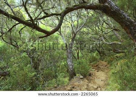 The mountain forest, Madeira, Portugal - stock photo