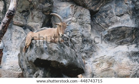 The mountain goats in the zoo thailand. - stock photo