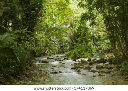 The mountain river in a rain forest, Philippines - stock photo