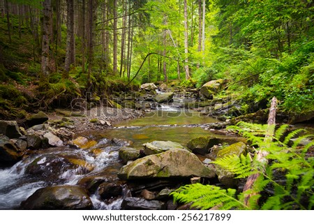 The mountain river in the Carpathians - stock photo