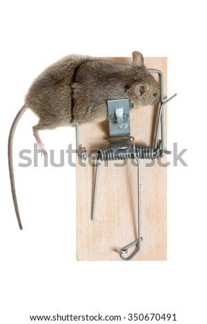 The mouse in a mousetrap it is isolated on a white background - stock photo