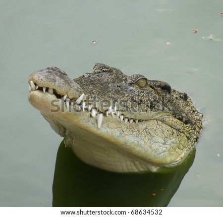 The mouth of a crocodile which is sticking out of water