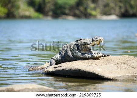 The Mugger or Indian or marsh crocodile is a freshwater crocodile in South Asia. Shot on river Kaveri or Cauvery in the Indian state of Karnataka - stock photo