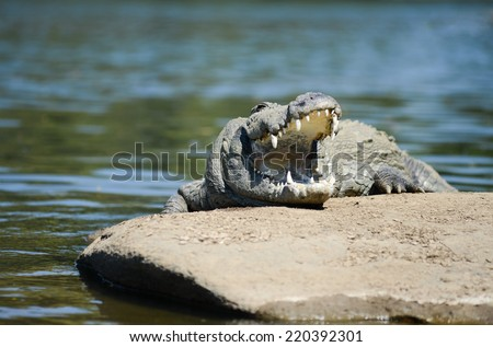 The Mugger or Indian or marsh crocodile is a freshwater crocodile in South Asia with mouth open. Shot in India, - stock photo