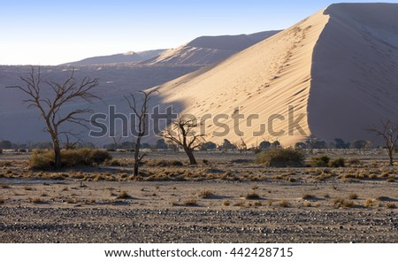 The Namib desert: Deadvlei and Big Daddy dune in Sossusvlei, Namibia - stock photo