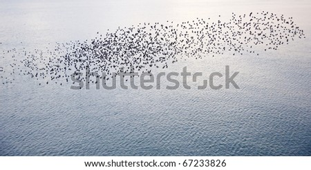 The natural phenomenon which occurs annually in UK of starlings migrating in very tight formation - stock photo
