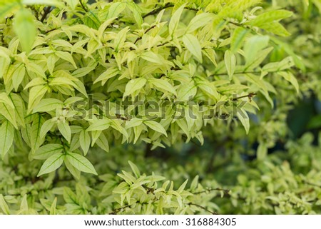 The nature green plant leaf background (soft focus)