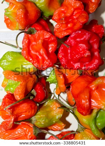 The nature vegetable Pepper object. - stock photo